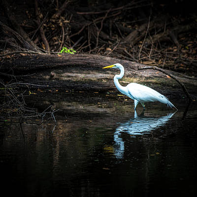 Wading Bird Photograph - Reflecting White by Marvin Spates