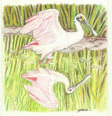 Spoonbill Drawing - Reflection Of A Spoon - Final by Sue Bonnar