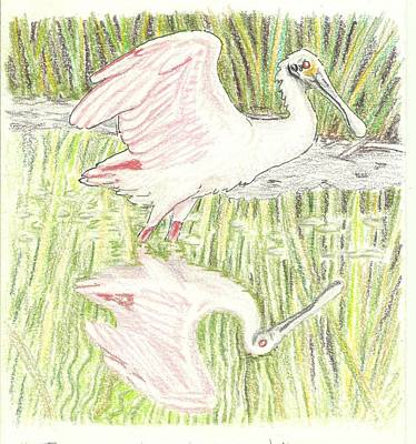 Spoonbill Drawing - Reflection Of A Spoon - Pre-water by Sue Bonnar