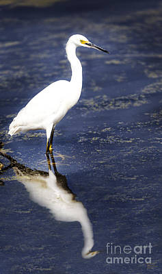 Egret Photograph - Reflection Of The Egret by David Millenheft