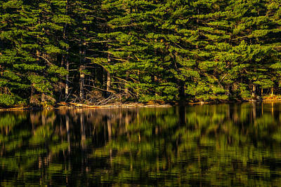 Reflection Of The Pines Print by Karol Livote