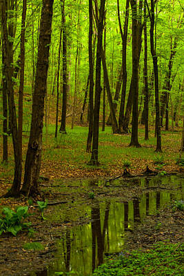 Reflections In The Woods Print by Karol Livote