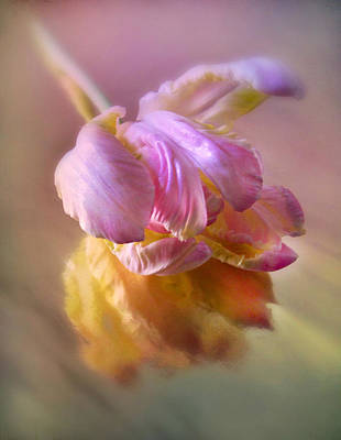 Soft Digital Art - Reflections Of A Tulip by Jessica Jenney