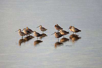 Dowitcher Painting - Reflections Of Dowitchers by Barbara Chichester