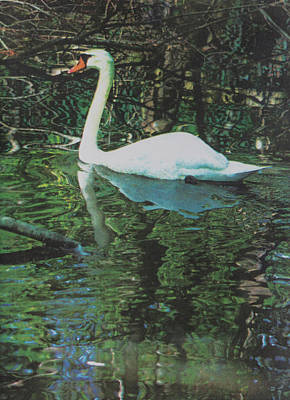 Printmaking Photograph - Reflections by Suzanne Gaff