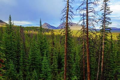Hiking Trail Photograph - Reids Peak by Chad Dutson