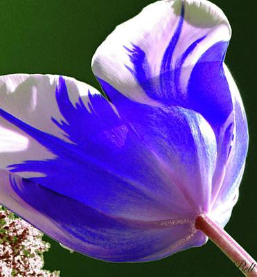 Artist Christine Belt Photograph - Reigning Tulips by Christine Belt