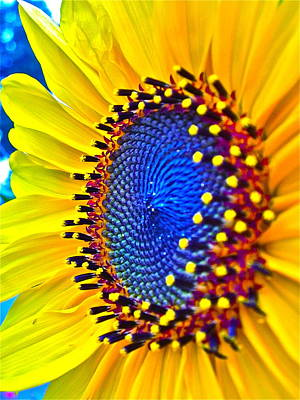Sunflowers Digital Art - Rejoice by Gwyn Newcombe