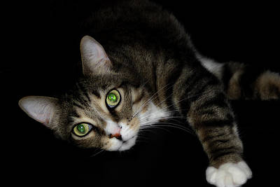 Of Cats Photograph - Relaxation by Mike Eingle