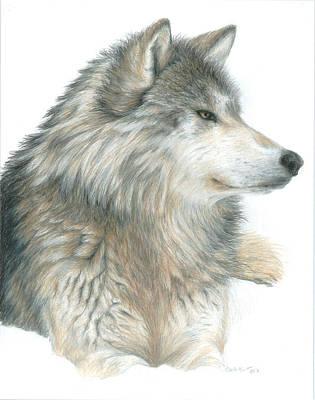 Wolf Drawing - Relaxing Wolf by Carla Kurt