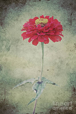 Aster Mixed Media - Remeber Me by Angela Doelling AD DESIGN Photo and PhotoArt