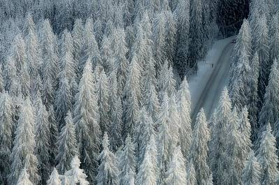 Fir Trees Photograph - Rendezvous by Teemu Kalliolahti