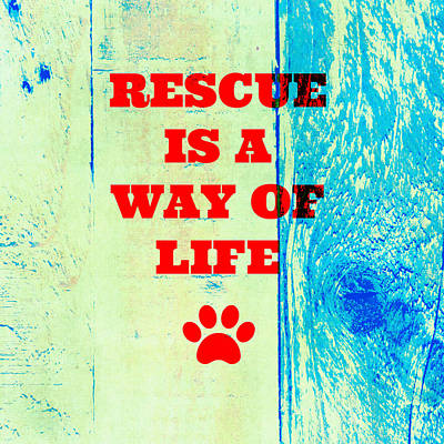 Must Art Mixed Media - Rescue Is A Way Of Life by Brandi Fitzgerald