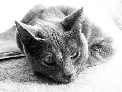 Black Cat Photograph - Resting by Amanda Barcon