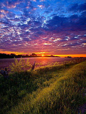 Environement Photograph - Revival by Phil Koch