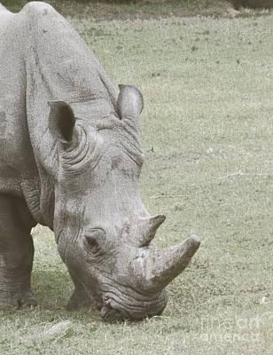 Digital Art - Rhino by Frank Williams