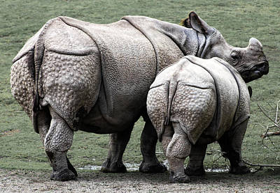 Rhinoceros Mother And Calf In Wild Print by Daniel Hagerman