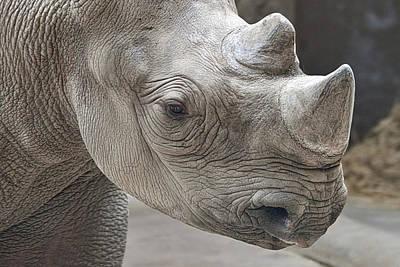 Rhinoceros Print by Tom Mc Nemar