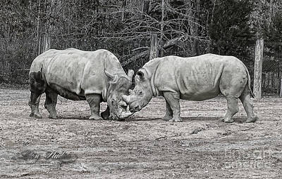 Digital Photograph - Rhinos by Melissa Messick