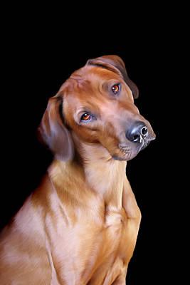 Canines Digital Art - Rhodesian Ridgeback by Julie L Hoddinott