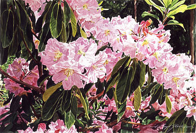 Rhodo Grove Print by David Lloyd Glover