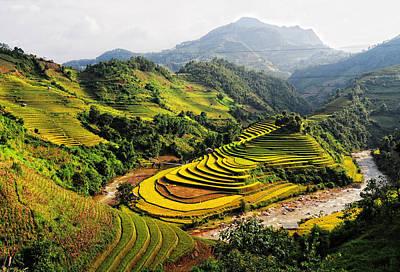 Rice Fields On Terraced In Vietnam Original by Phuong Duy Nguyen