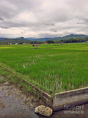 Rice Paddy In The Philippines Print by Kay Novy