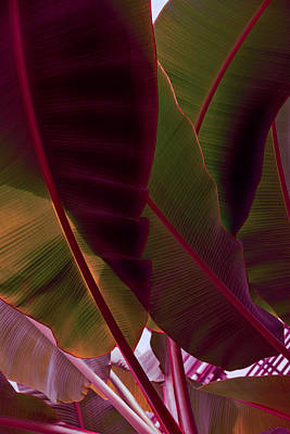 Vivacious Digital Art - Rich Maroon And Jungle Green - Exotic Tropics by Georgia Mizuleva