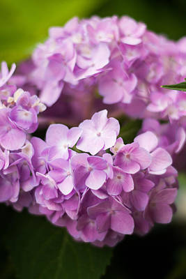 Annabelle Photograph - Rich Purples by Parker Cunningham
