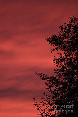 Tree Photograph - Rich Red Orange by Carolyn Brown