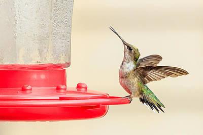 Right Hummingbird Print by Joni Eskridge