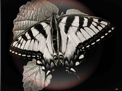 The View Mixed Media - Rings Of Monarch by Debra     Vatalaro