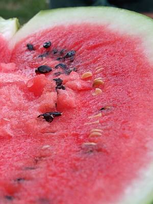 Watermelon Photograph - Ripening by Dorin Emanoil Pirvu
