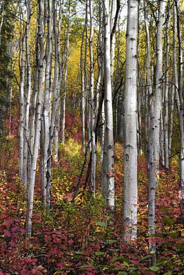 Alaska Photograph - Riser by Ed Boudreau