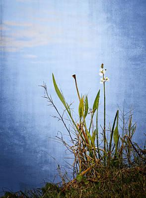 Photograph - Riverbank Beauty by Carolyn Marshall