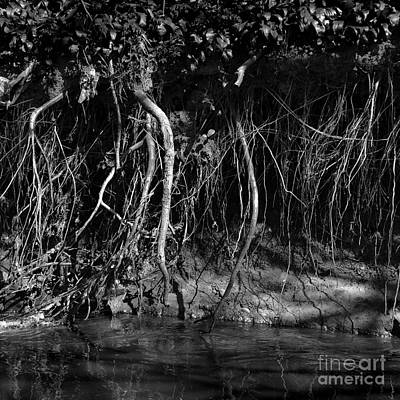 Riverbank Entanglements I Original by Paul Davenport
