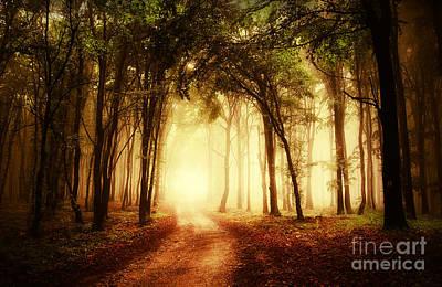Road Through A Golden Forest At Autumn Print by Caio Caldas