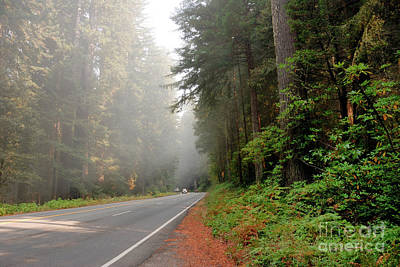 Road Through Redwoods Print by Betty LaRue