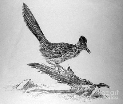Roadrunner Drawing - Roadrunner by Roy Anthony Kaelin