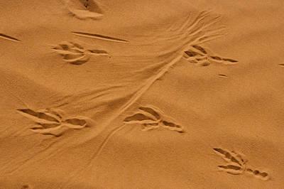 Roadrunner Tracks In The Sand Print by Michael Melford