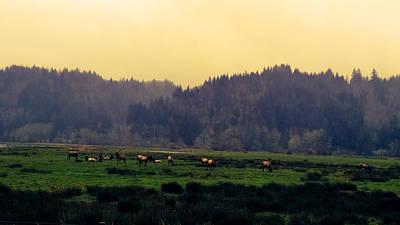 Roaming Elk Photograph - Roaming Elk by Pacific Northwest Imagery
