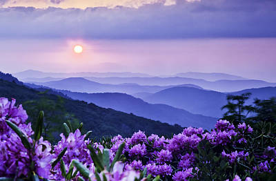Rhododendron Photograph - Roan Mountain Sunset by Rob Travis