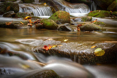 Roaring Fork Stream Great Smoky Mountains Print by Steve Gadomski