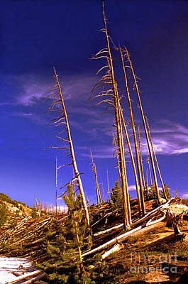 Photograph - Roaring Mountain Trees by Rich Walter