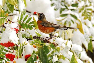 Photograph - Robin And First Snowfall by Andrea Kollo