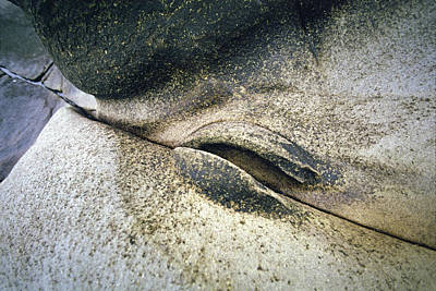 Rock Beach's Detail Print by Daniel Furon