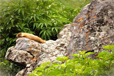Groundhog Photograph - Rock Chuck by Lana Trussell
