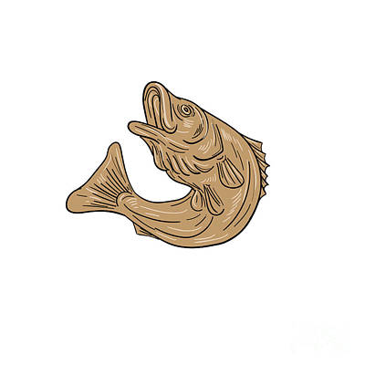 Rockfish Jumping Up Drawing Print by Aloysius Patrimonio