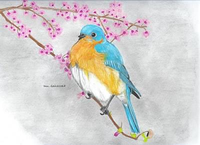 Bluebird Drawing - Rocky Mountain Bluebird by Don  Gallacher