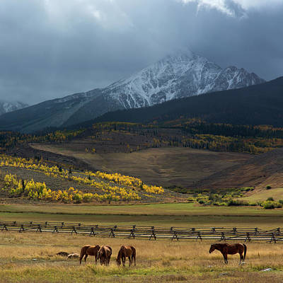 Gore Range Photograph - Rocky Mountain Horses by Aaron Spong